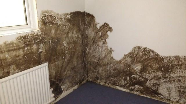 Image 24 - wet rot to basement walls kent