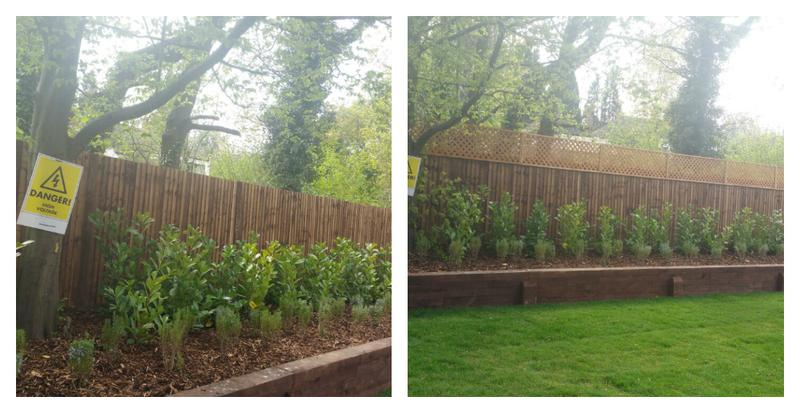 Image 69 - Trellis fitted to the top of an existing fence.