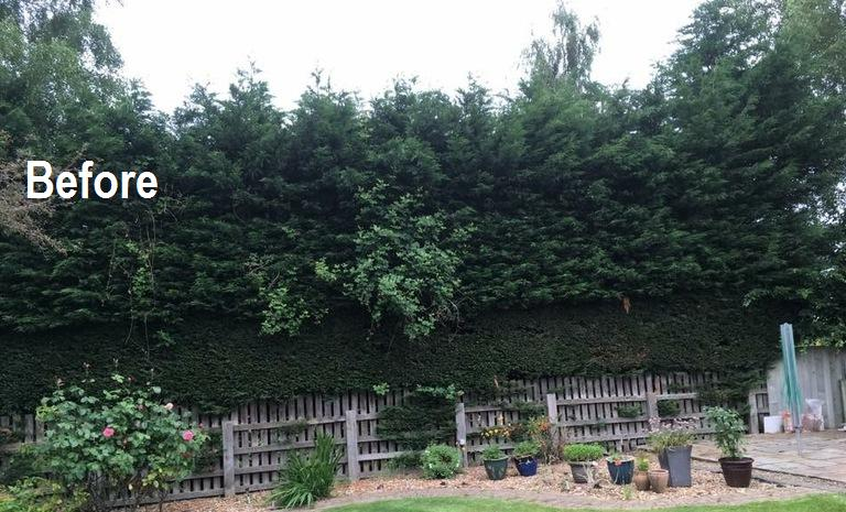 Image 7 - Hedge trimming: BEFORE