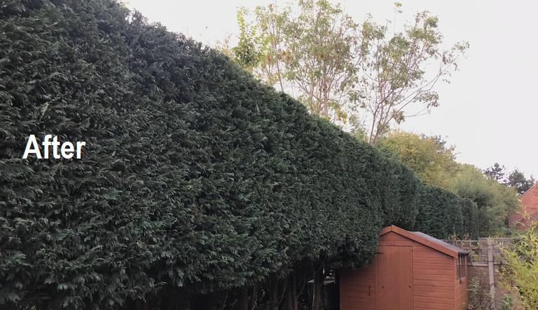 Image 6 - Hedge trimming: AFTER