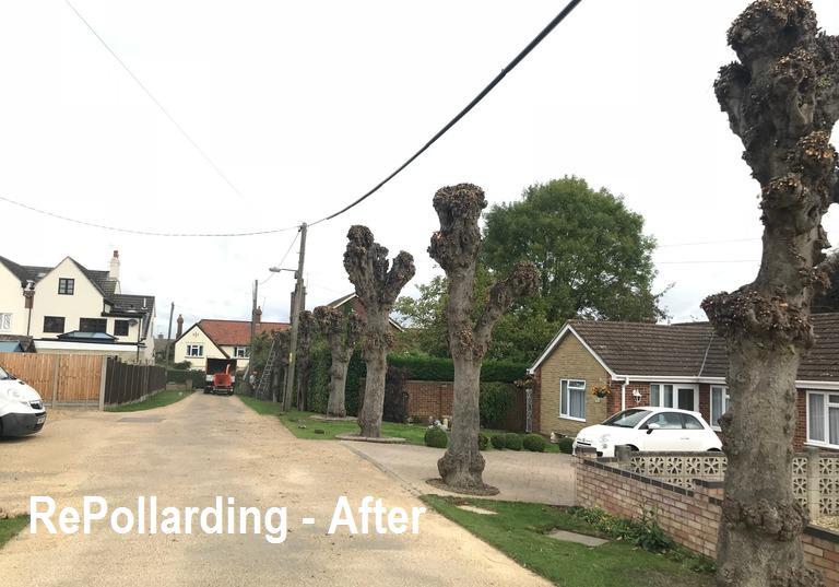 Image 12 - Pollarding works AFTER