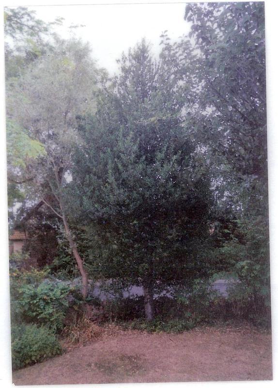 Image 50