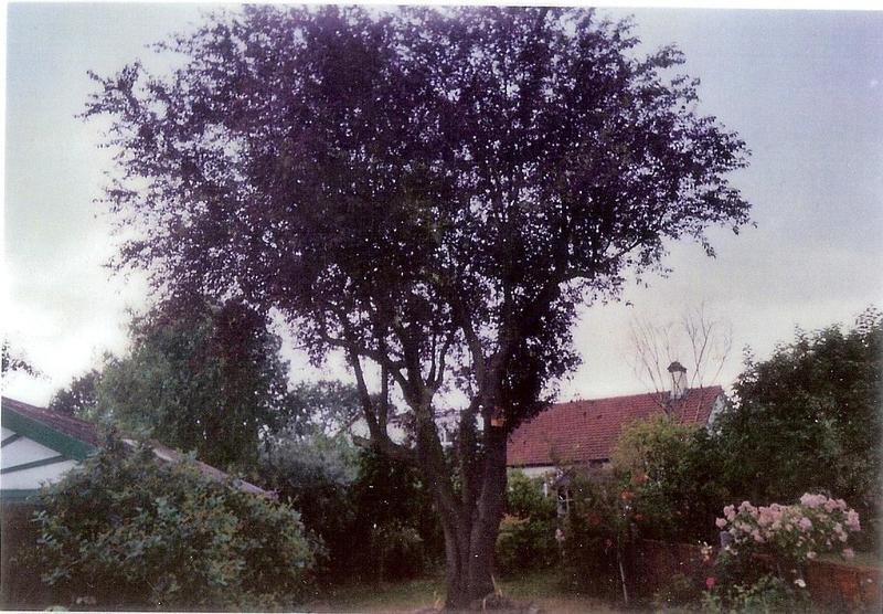 Image 56
