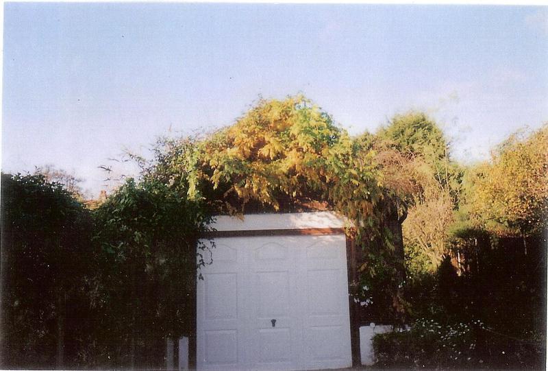 Image 66