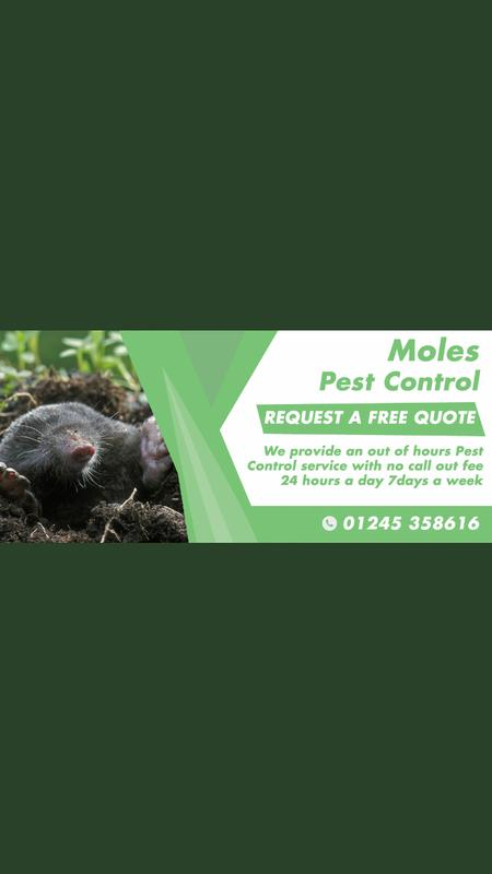 Image 28 - Our Mole Pest Control