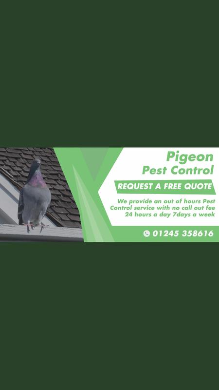 Image 24 - Our Pigeon Pest Control
