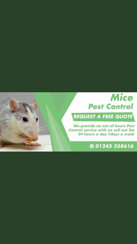 Image 20 - Our Mouse Pest Control