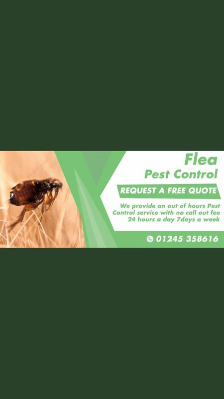 Image 27 - Our flea Pest Control