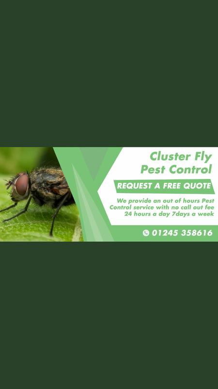 Image 18 - Our Fly Pest Control