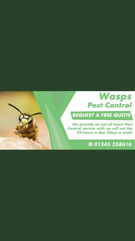 Image 19 - Our Wasp Pest Control