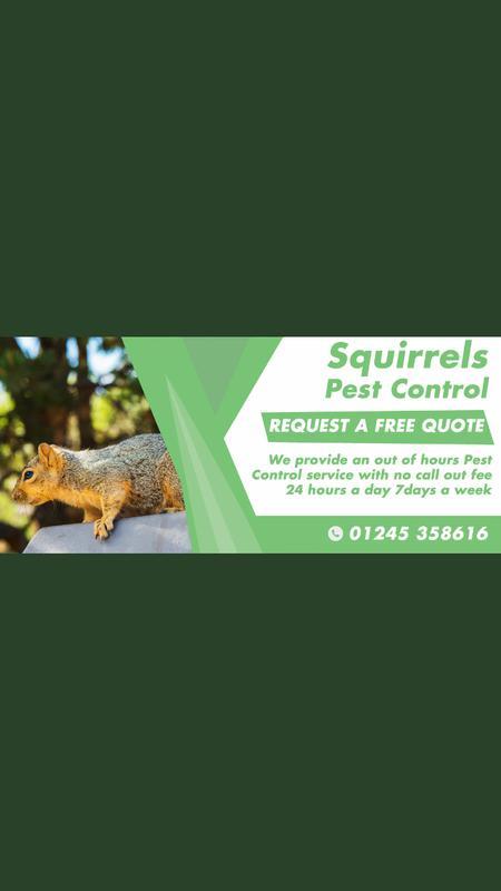 Image 23 - Our Squirrel Pest Control