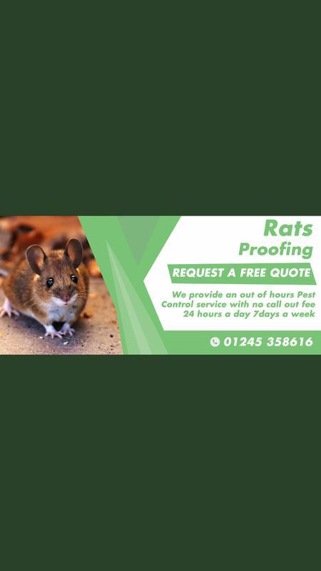 Image 22 - Our Rat Pest Control