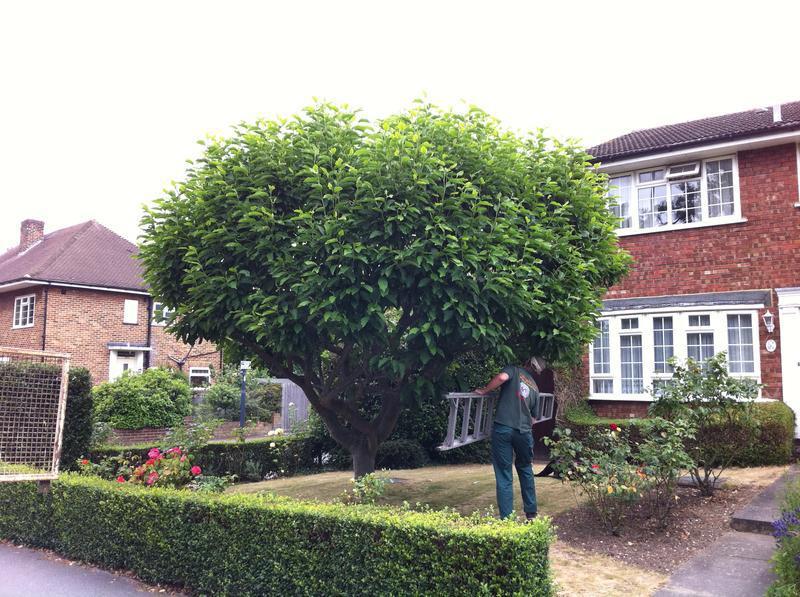 Image 80 - Tree prune