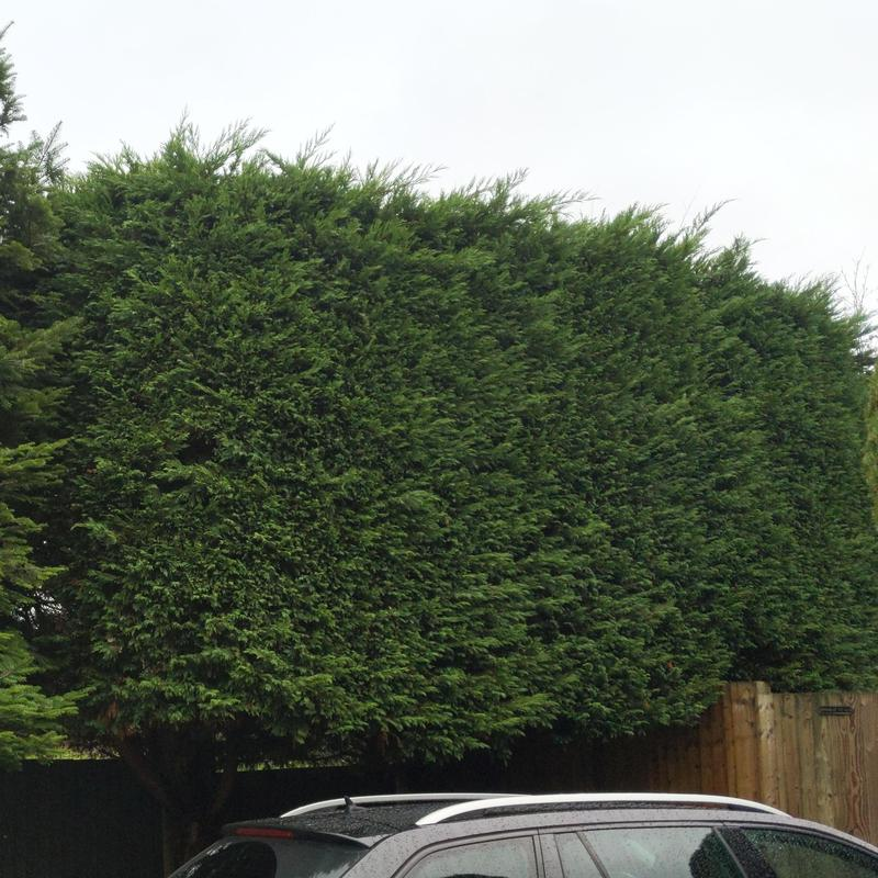 Image 4 - Hedge before