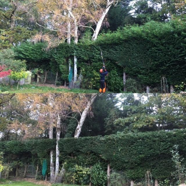 Image 1 - Reduced the height by 1m and trim annual growth off the sides on this cypress hedge.