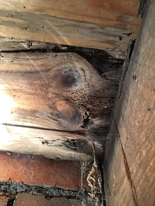 Image 18 - Wet rot decay basement Yorkshire
