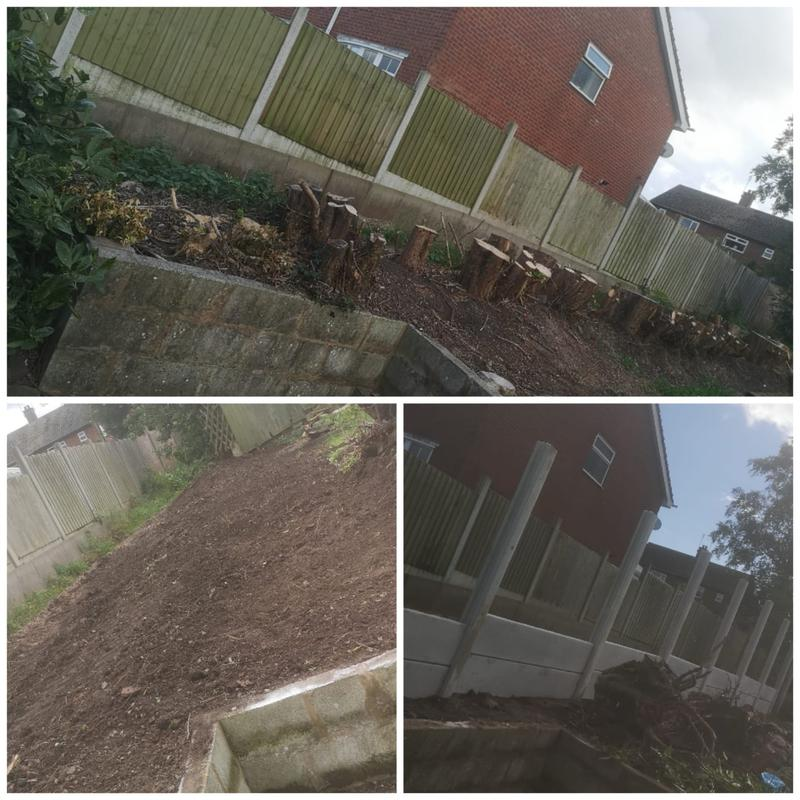 Image 21 - HEDGE REPLACEMENT