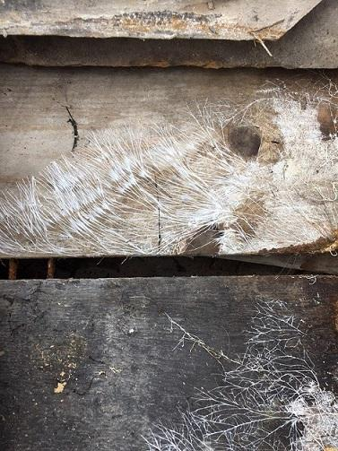 Image 13 - Wet rot decay Yorkshire