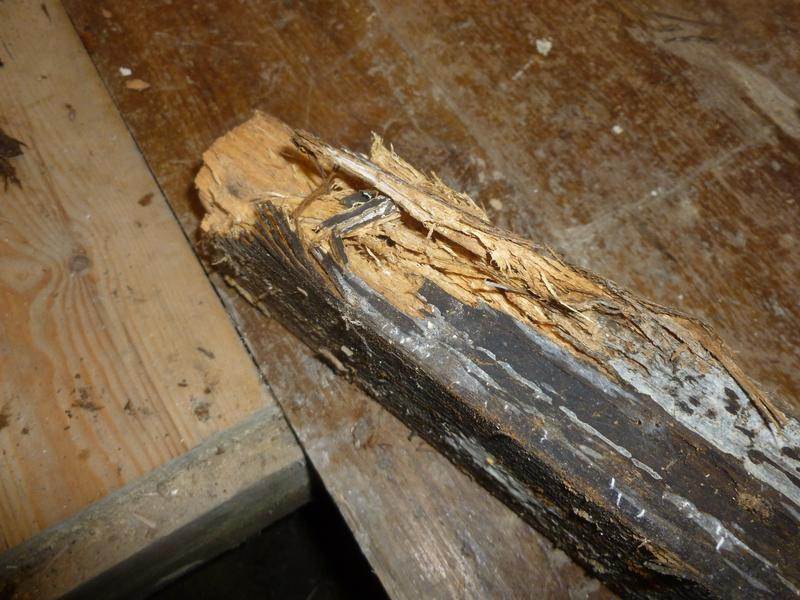 Image 8 - Wet rot fungus causing timber decay