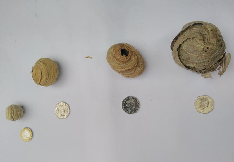 Image 7 - Wasps nests early stages