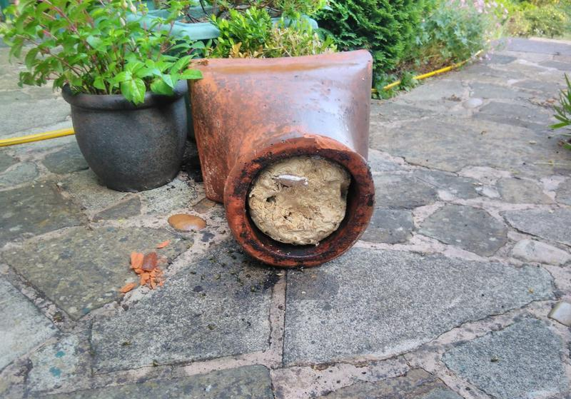 Image 8 - I found this Wasp nest under a plant pot. Wasps will nest just about anywhere!