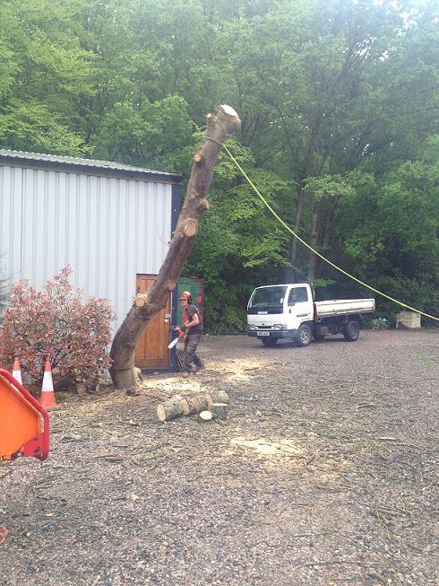 Image 7 - Oak fell.